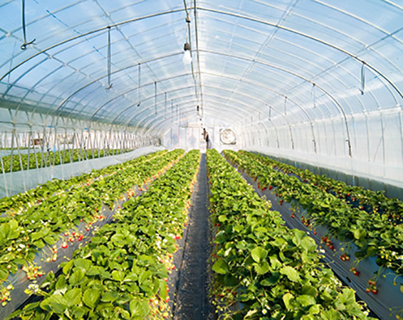 best quality greenhouse inside shading products supplier