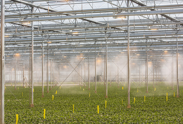 greenhouse fogging